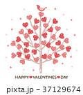 バレンタイン バレンタインデー ハートのイラスト 37129674