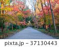 下鴨神社 糺の森 紅葉の写真 37130443