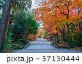 下鴨神社 糺の森 紅葉の写真 37130444
