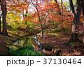 下鴨神社 糺の森 紅葉の写真 37130464