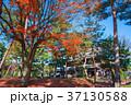相国寺 紅葉 京都の写真 37130588