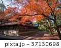上御霊神社 紅葉 京都の写真 37130698