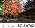 上御霊神社 紅葉 京都の写真 37130702