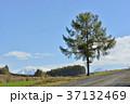 北海道 美瑛 丘の写真 37132469