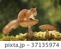 自然 かわいい キュートの写真 37135974