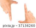 手先 指差す 指差しの写真 37136260