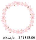 桜 花 春のイラスト 37136369