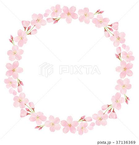 桜_ソメイヨシノ 37136369