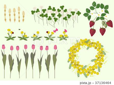 春の植物のイラスト春の花季節のイラストのイラスト素材 37136464