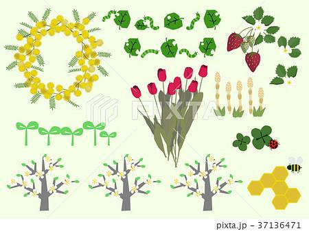 春の植物のイラスト春の花季節のイラストのイラスト素材 37136471