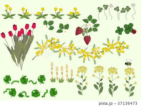 春の植物のイラスト春の花季節のイラストのイラスト素材 37136473