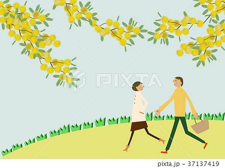 ミモザの花と散歩するカップル。春のイメージ。 37137419
