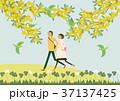 ミモザの花と散歩するカップル。春のイメージ。 37137425