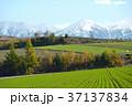 北海道 美瑛 丘の写真 37137834