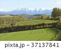 北海道 美瑛 丘の写真 37137841