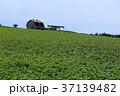 北海道 大空町 晴れの写真 37139482