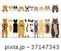 立ち上がった猫たちのボーダーのセット 37147343