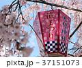 大村神社 桜と提灯 37151073