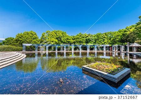 多摩中央公園 きらめきの池 37152667