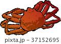 蟹 かに カニ イラスト  37152695