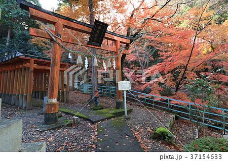 紅葉と滋賀県米原市にある春川稲荷神社の鳥居です 37154633