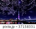 東京スカイツリーと夜桜 37158331