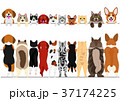 立ち上がった小型犬と猫のボーダーのセット 37174225