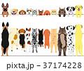 立ち上がった犬と猫のボーダーのセット 37174228