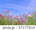 青空 空 雲の写真 37177014