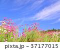 青空 空 雲の写真 37177015