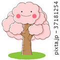 桜の木 桜 木のイラスト 37181254