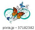 無限 オレンジ色の蝶 蝶のイラスト 37182382