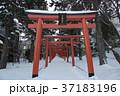 札幌伏見稲荷神社 37183196