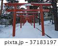 札幌伏見稲荷神社 37183197