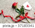 一輪の赤い薔薇とメッセージカード ニット生地背景 37183341