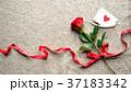 一輪の赤い薔薇とメッセージカード ニット生地背景 37183342
