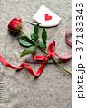 一輪の赤い薔薇とメッセージカード ニット生地背景 37183343