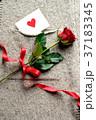 一輪の赤い薔薇とメッセージカード ニット生地背景 37183345