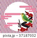 立春のイメージの背景・アイコン|和風・春のイメージ 梅とウグイス 新春・節分|グラフィック素材 37187032