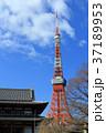 増上寺 寺院 東京タワーの写真 37189953