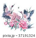 つる ツル 鶴のイラスト 37191324