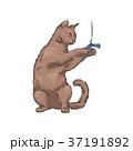 ねこ ネコ 猫のイラスト 37191892