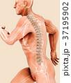 3d illustration male running pose skeleton joint 37195902