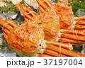 カニ 蟹 ズワイガニの写真 37197004