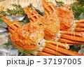カニ 蟹 ズワイガニの写真 37197005