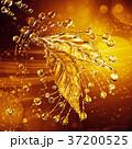 葉っぱ 水分 しぶきのイラスト 37200525