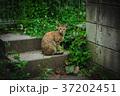 草むらの野良猫 37202451