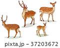 イラスト 挿絵 動物のイラスト 37203672