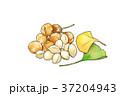 料理 食 食べ物のイラスト 37204943