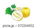 食 料理 食べ物のイラスト 37204952